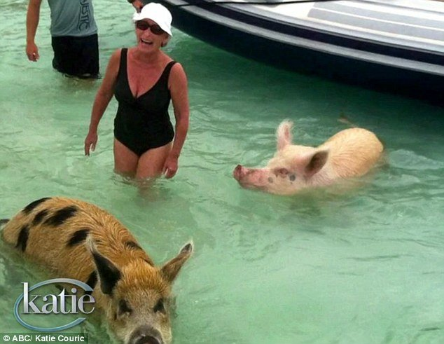 judge judy swimming with pigs on her superyacht vacation on Triumphant Lady in the bahamas